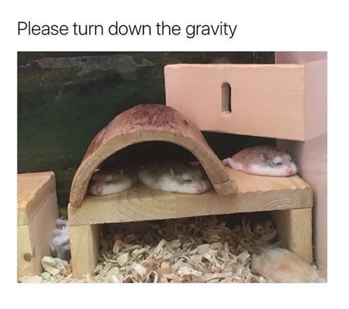 turndownthegravity